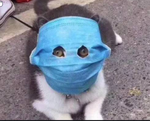 Cat wearing face mask